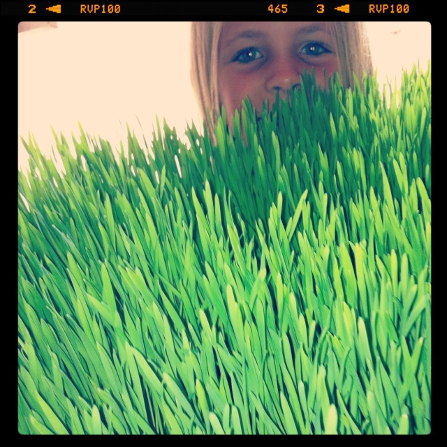 Wheatgrass makes you beautiful. Coastal Chiropractic- Focus on Health